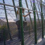Fence-sensitivity-test